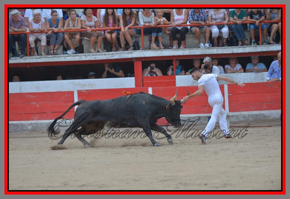 Chicharito Caillan enzo bernard  04 09 16( chritian muscat)