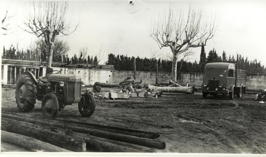 31 arachage des platanes en 1955
